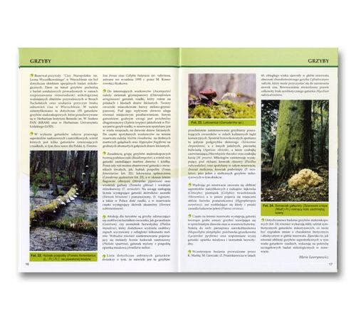 broszura szyta Cisy format A5