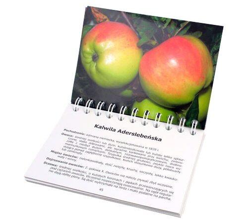 katalogi reklamowe bindowane